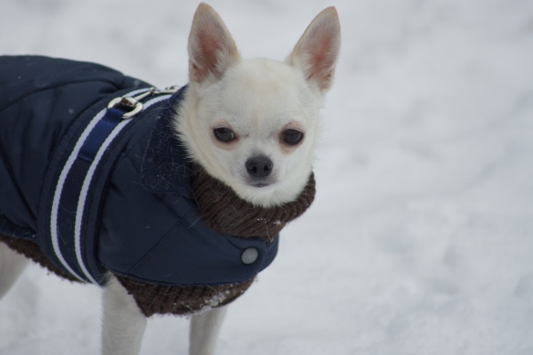 Lumi tuli Kokkolaan